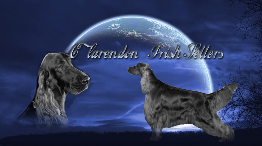 Clarendon Irish Setters